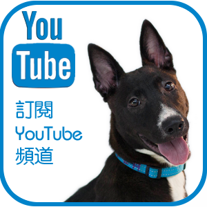 訂閱 SPCA Youtube 頻道