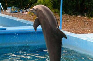 Marine Mammals in Captivity