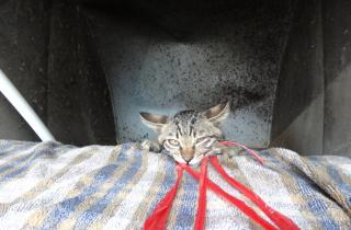 July 2016 Rescue of a cat trapped in ventilation pipe (51TP-0716 / PN390061 / Sho)