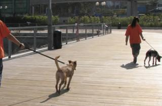 Pet Access to Open Public Space