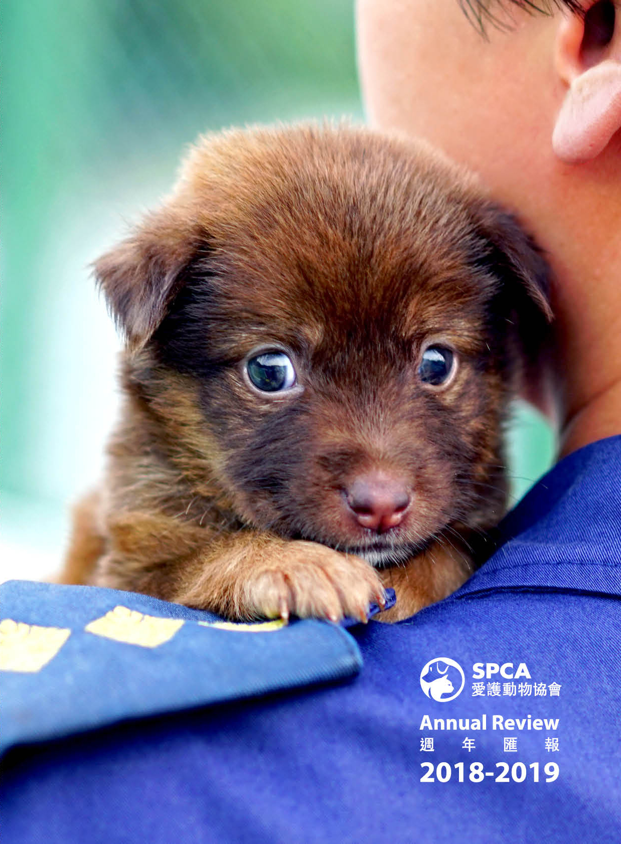Spca Hong Kong Annual Review