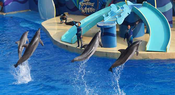 Is this dolphin display educational?