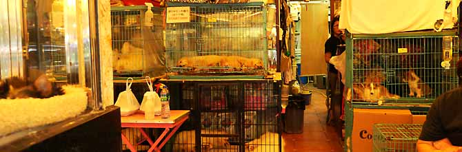 A Mong Kok Pet Shop, with pups jammed in cages - a cruel front for more cruelty.