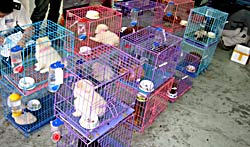 "Pups ""warehoused"", awaiting pet shop space."