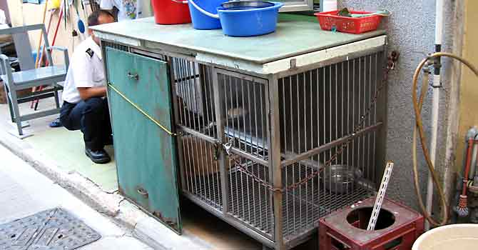 Keeping a dog in a cage where it can stand up and move in all directions, may not costitute an offence under the current Prevent of Cruelty to Animals legislation, but it constitutes very poor animal welfare.
