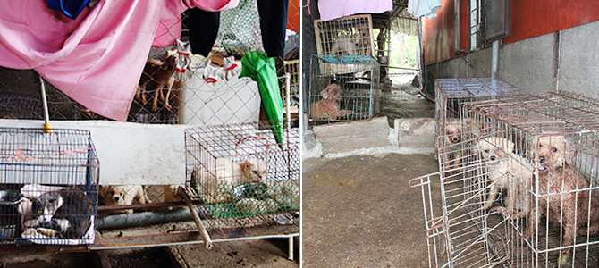 50 dogs and 11 cats in a breeding farm, owner prosecuted