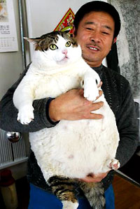 Cat weighing 33lbs